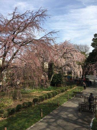 Fuchu, Japan: 山門前より