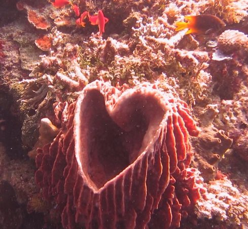 Siladen Island, Indonesië: found a heart underwater