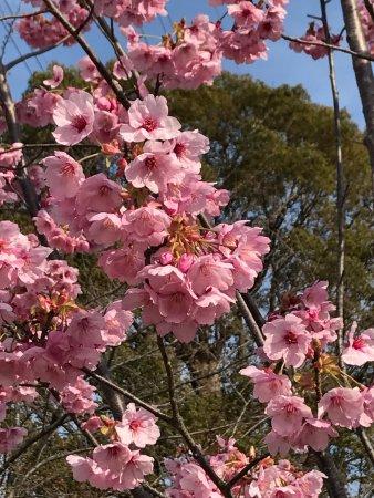 Abiko, Japan: 手賀沼公園