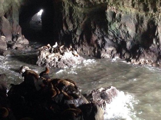 Sea Lion Caves: photo2.jpg