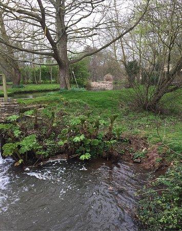 Cannington, UK: photo0.jpg