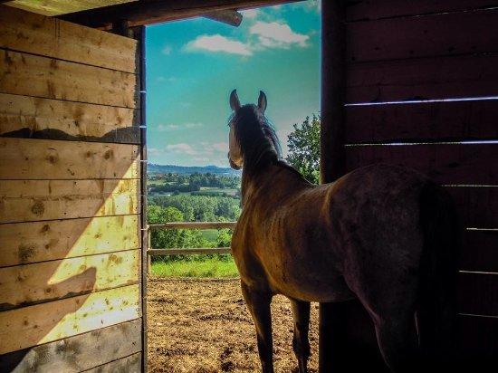 Turismo Equestre La Mura