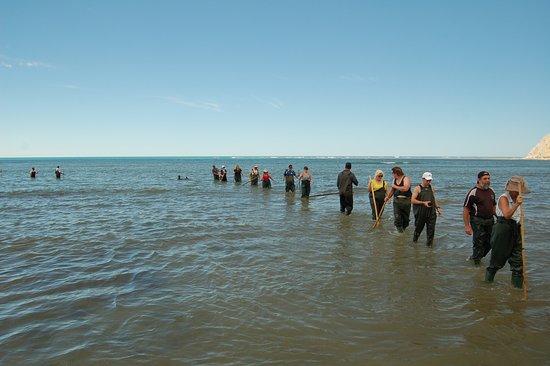 Gisborne, Nya Zeeland: Returning before the tide comes in.