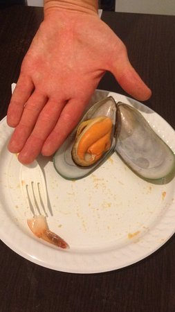 Auckland Region, New Zealand: green mussel