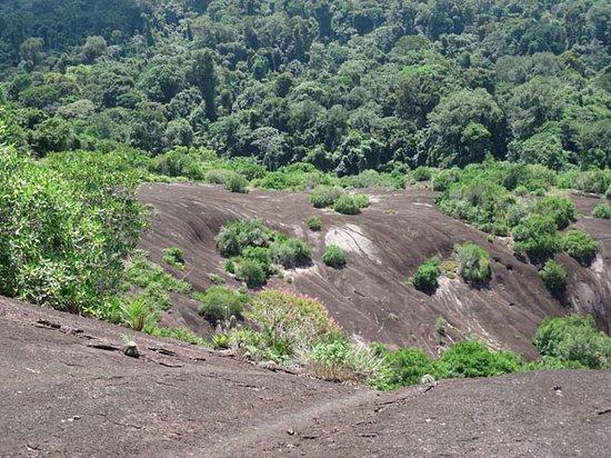 Suriname: De voetheuvels waar hazen liepen