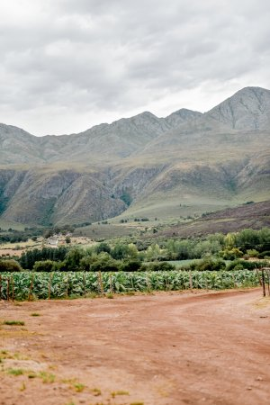 Swartberg Country Manor: Beautiful Farm surroundings