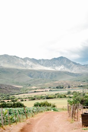 Swartberg Country Manor: A walk on the farm