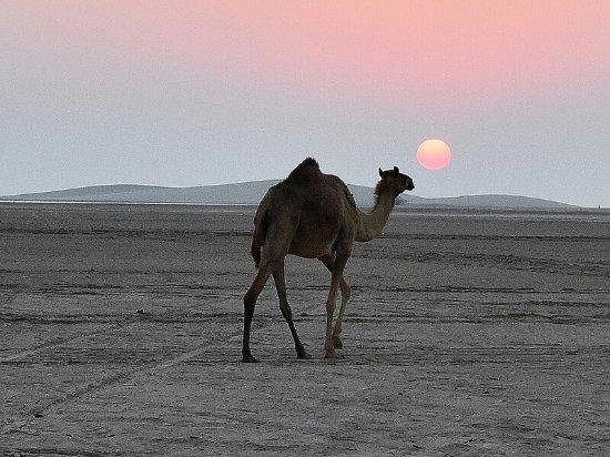 Mesaieed, קטאר: Sunset at Qatar desert