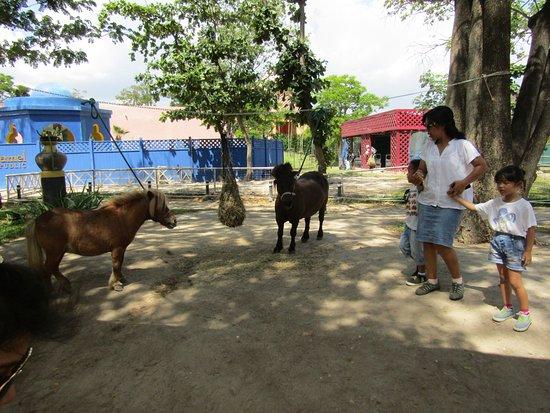 Cha-am, Tailandia: kuda poni