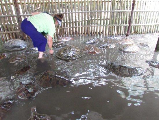 Τανζουνγκμπενόα, Ινδονησία: I don't know if it helped but, I tried to splash water over as many as I could -they were all so