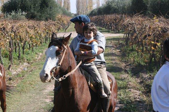 Posada Cavieres Wine Farm: horseriding at el Rancho Viejo