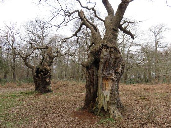 Richmond, UK: 立派な樹木