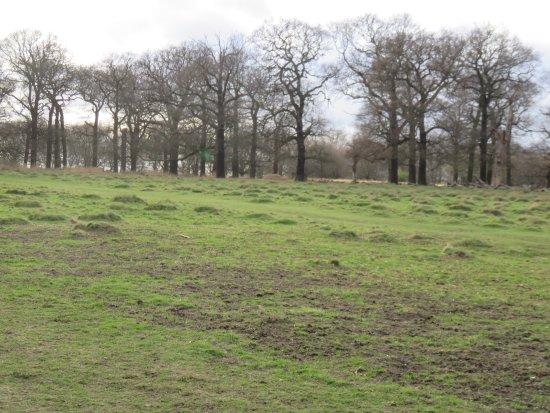Richmond, UK: 最高の散歩コース