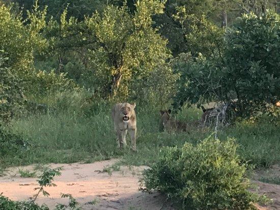Частный заповедник Класери, Южная Африка: photo5.jpg