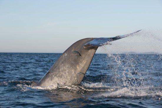 Eastern Province, Sri Lanka: кит