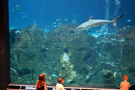 Sharks Picture Of Adventure Aquarium Camden Tripadvisor