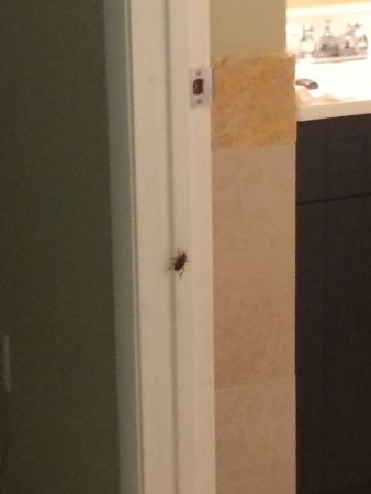 Hillsboro Beach, FL: Roaches and bed bugs!!! Don't stay here. We will be calling the FL Dept of hotels and filing a c