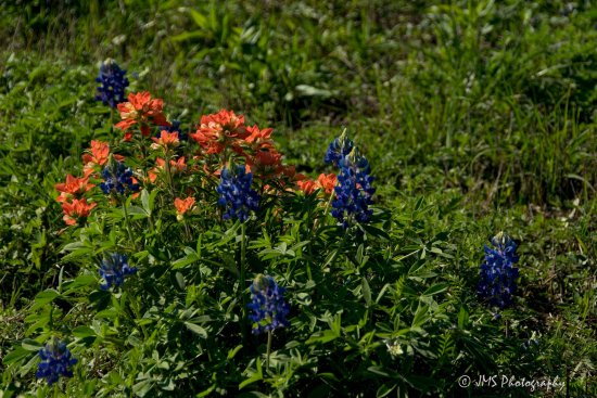 Ennis, تكساس: Lovely little bunches of wildflowers everywhere you look!