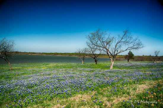 Ennis, تكساس: A picnic area along side Lake Bardwell in Ennis.