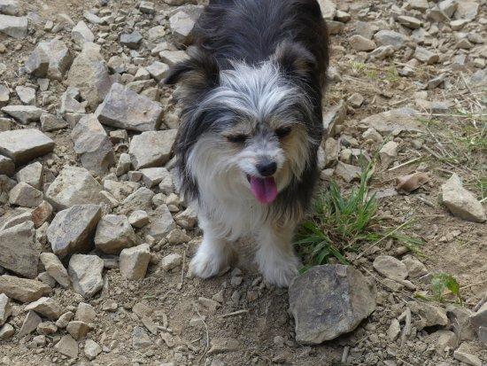 Tongariro National Park, New Zealand: Devoted dog Mana