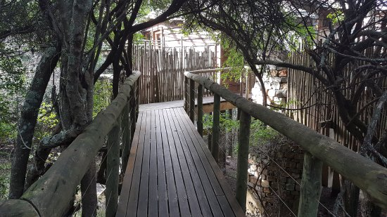 Harkerville, South Africa: Tsala Treetop Lodge