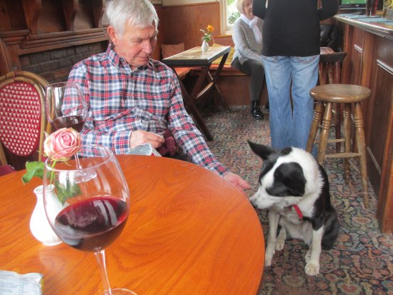 Great Missenden, UK: in the bar - gorgeous pub dog