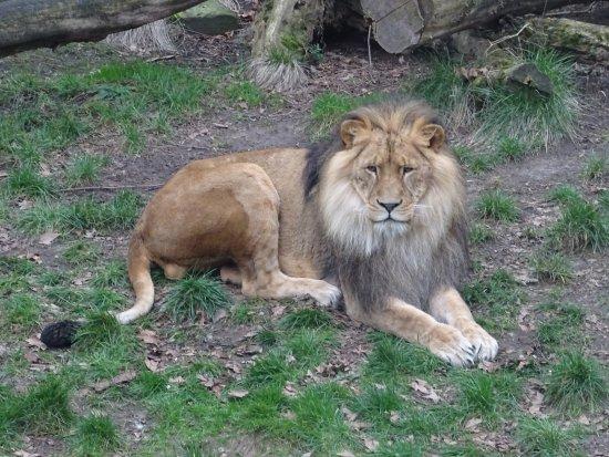 Antwerp Zoo (Dierentuin): ANTWERP ZOO