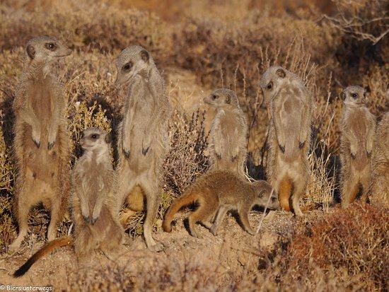 Meerkat Adventures照片