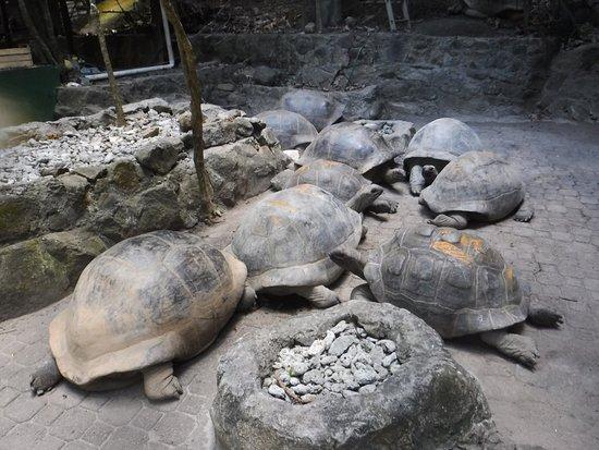 Mahe Island, Seychelles: photo0.jpg
