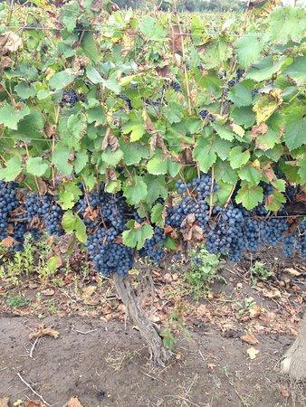 Postales Boutique Wine Hotels - Valle de Uco : photo3.jpg