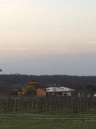 Makanda, IL: 5 minute walk through the vineyard to Blue Sky