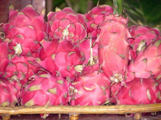 Balgue, Nicarágua: pitahaya - dragon fruit