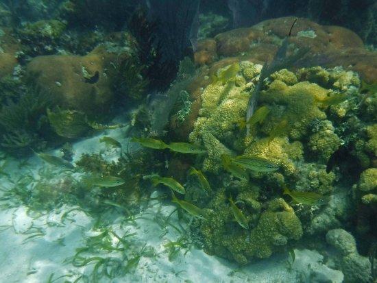 ปลาเซนเซีย, เบลีซ: Snorkeling