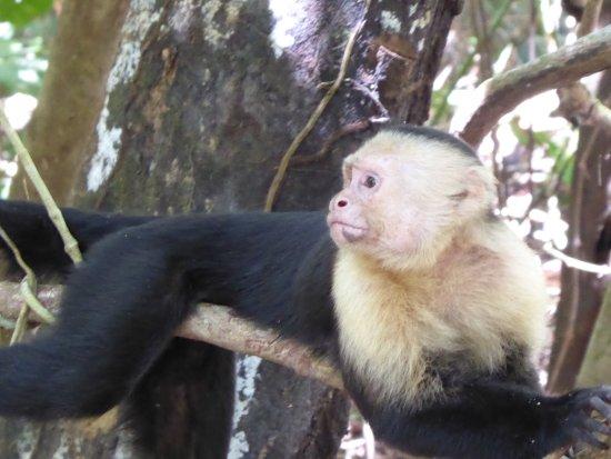 Quepos, Costa Rica: Monkey