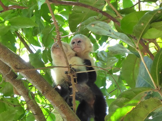 Quepos, Costa Rica: Monkey and baby