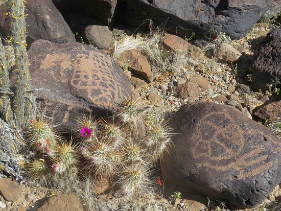 Cabeza Prieta National Wildlife Refuge: some of the thousands of petroglyphs at Charlie Bell Well