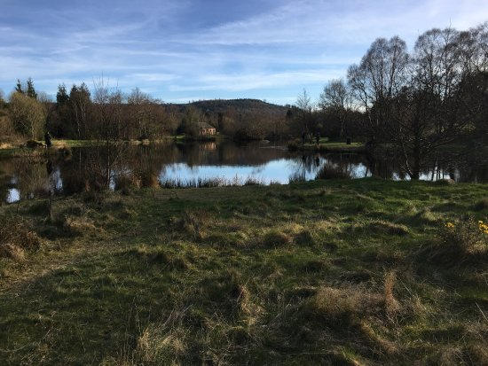 Annamoe Trout Fishery: Perfect for a picnic with super Rainbow trout fly fishing