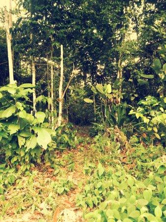Yacu Puma Center : En la selva.