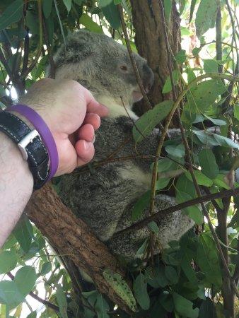 Australia Zoo: So cute