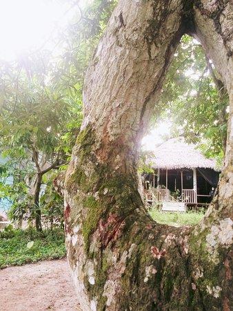 Yacu Puma Center : Su jardín.