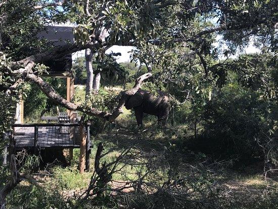 Simbavati River Lodge: photo4.jpg