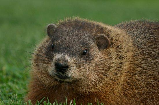Meadows of Dan, VA: Wildlife at Primland