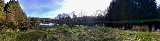 Annamoe Trout Fishery: photo0.jpg