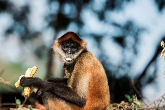 Granada, Nicaragua: Our favorite monkey that lives in Las Isletas
