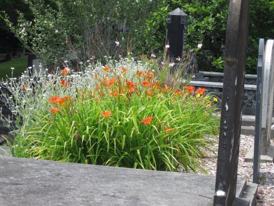 New Plymouth, New Zealand: December flowering daylilies & lychnis