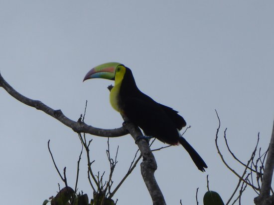 Almiza Tours by My friend Mario - Tours : Toucan in the park