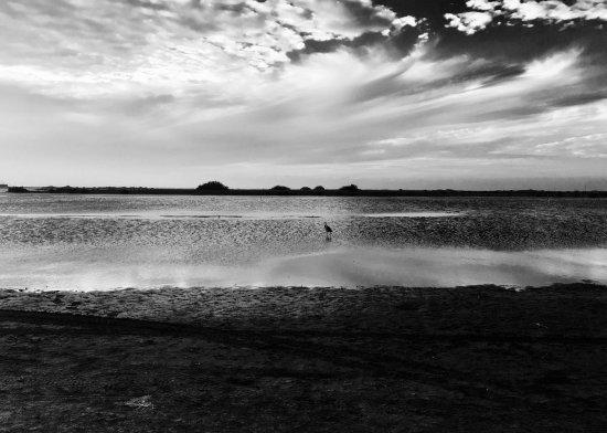 Padre Island National Seashore: photo5.jpg