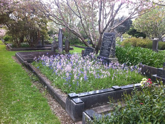 นิวพลีมัท, นิวซีแลนด์: October - bluebells