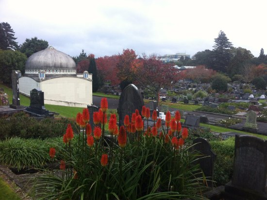 New Plymouth, نيوزيلندا: early June - autumn - red hot pokers