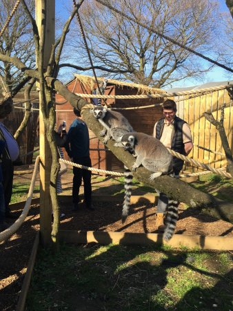 Wolverhampton, UK: Wild Zoological Park